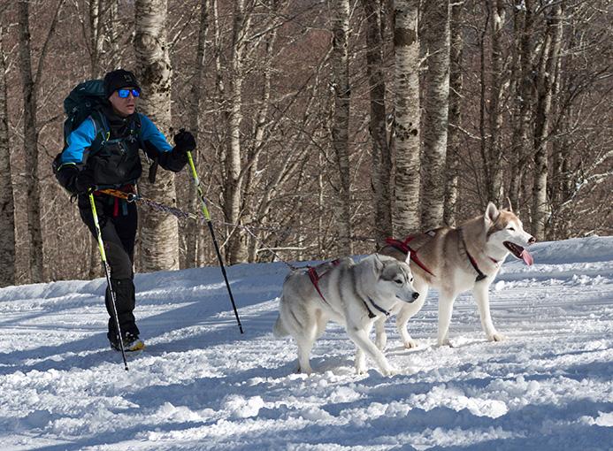 Sila 3 Vette dog endurance