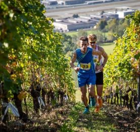 Grosjean Wine Trail